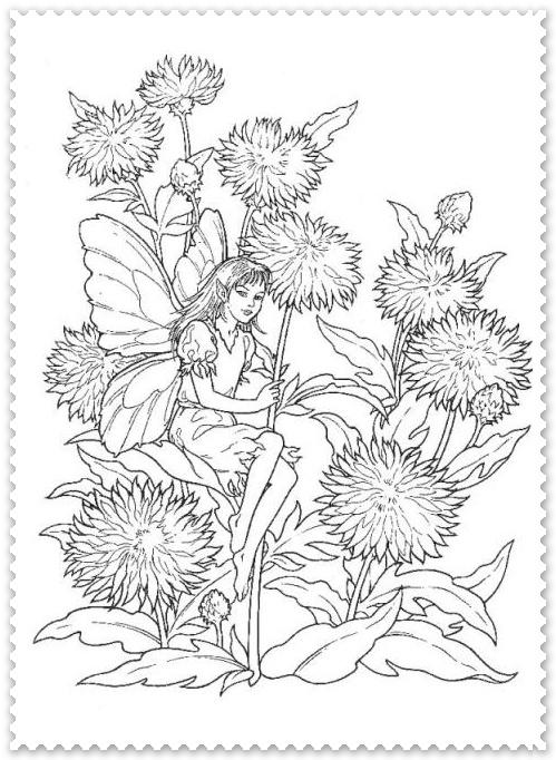 Crizanteme Planse De Colorat