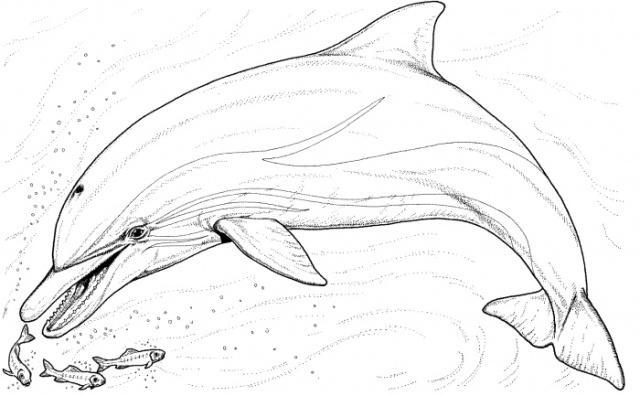 Delfini Desene
